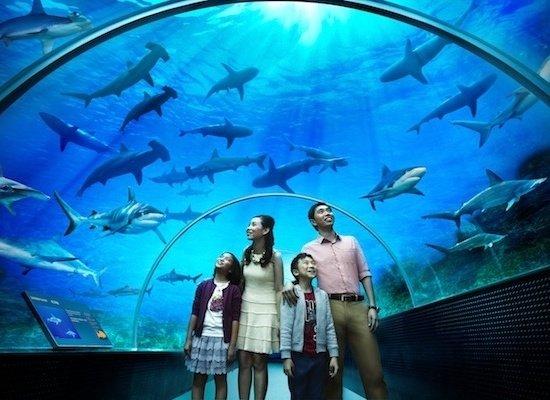 Фото Сингапурский Аквариум. Сингапур, Sentosa Gateway, 8