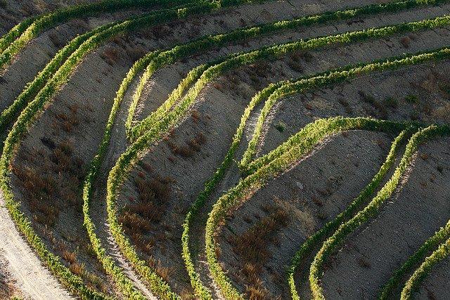 Фото Винодельческий район Алту-Дору. Португалия, Viseu, Unnamed Road