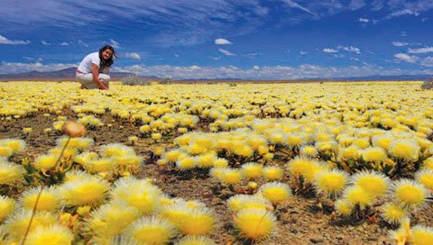 Фото Экообласть Суккулент Керу. Южная Африка, Northern Cape
