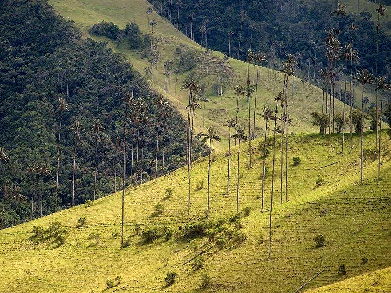 Фото Долина Кокора. Колумбия, Валье-дель-Каука, Эль Агила, Ла Селия - Эль Агила