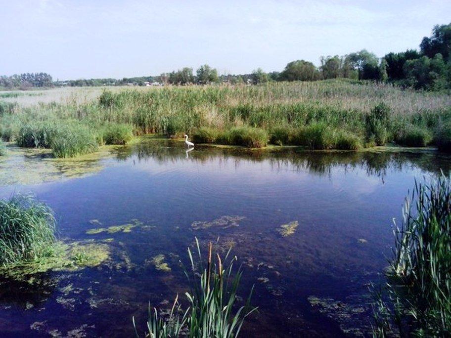 Фото На лугах .. Россия, Белгородская область, Р187