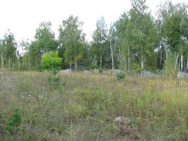 Фото Вид на кладбище.JPG. Россия, Рязанская область, Калинино, Unnamed Road