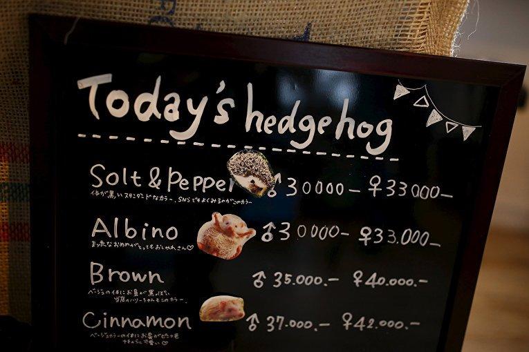 Фото Ежовое кафе. Япония, Tokyo-to, Minato-ku