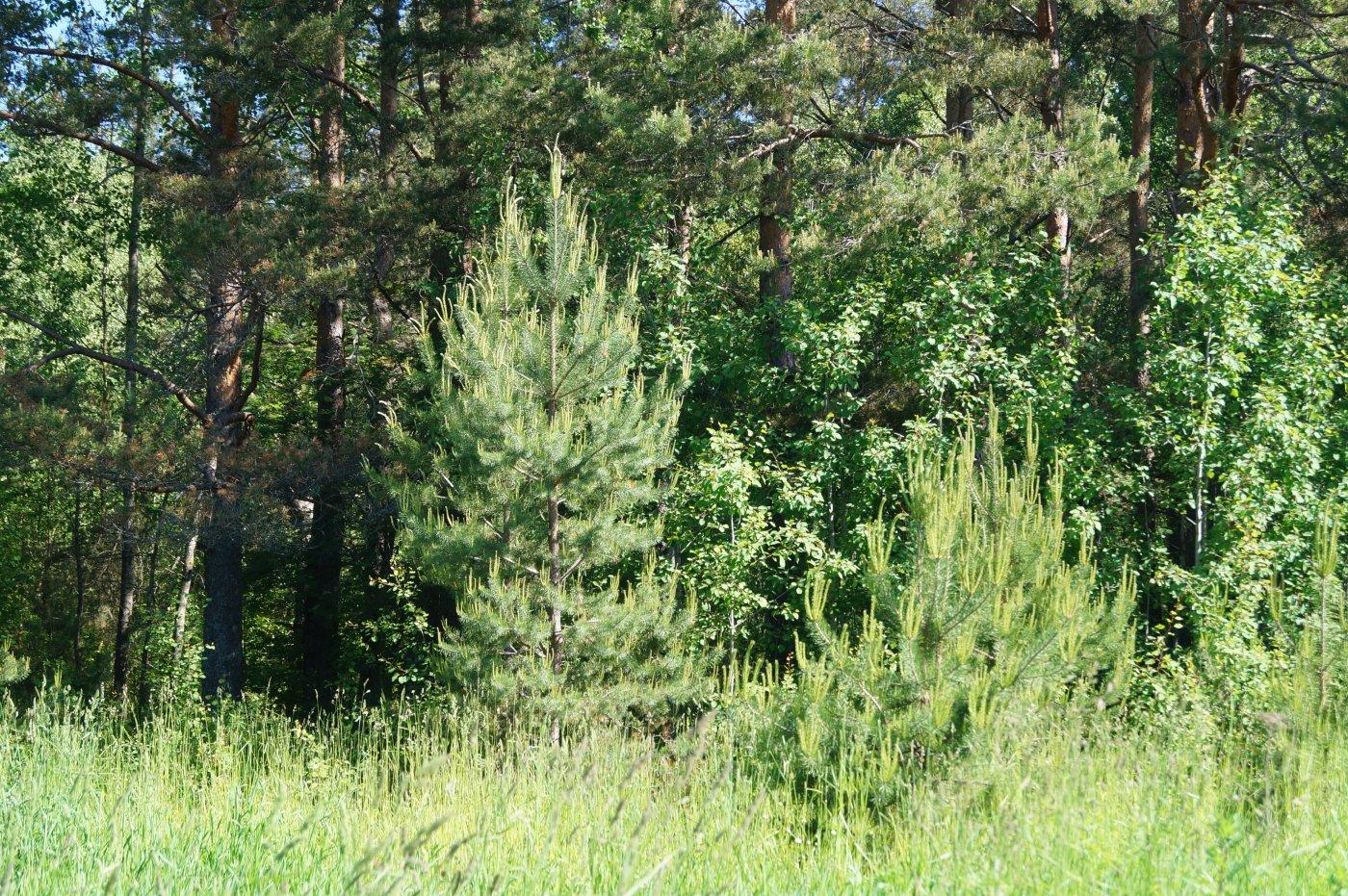 Фото DSC08079.JPG. Россия, Тверская область, Якимовская, Unnamed Road