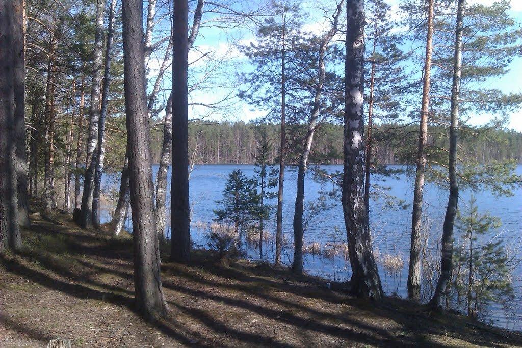 Фото озеро Большое Бережное. Россия, Ленинградская область, Unnamed Road