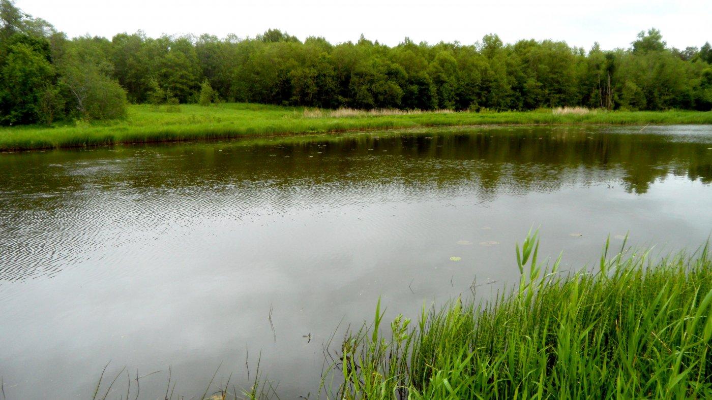 Фото Речка 3.jpg. Россия, Тверская область, Верезино, Unnamed Road