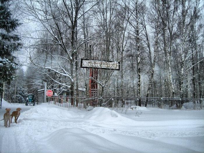 Фото 1.jpg. Россия, Тульская область, Р139