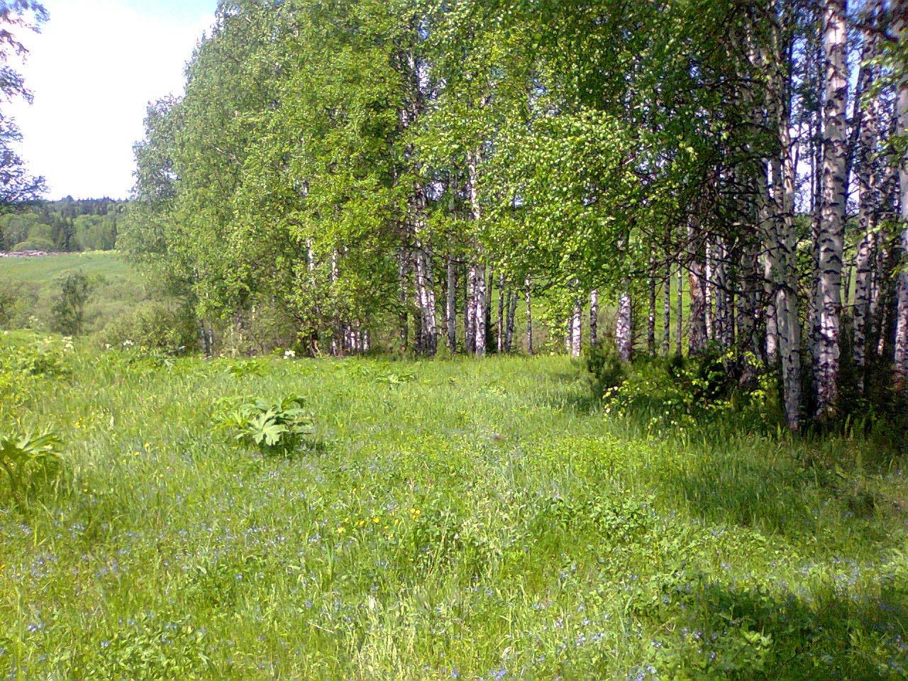Фото Вид на большую поляну. Россия, Кемеровская область, автодорога Байкал