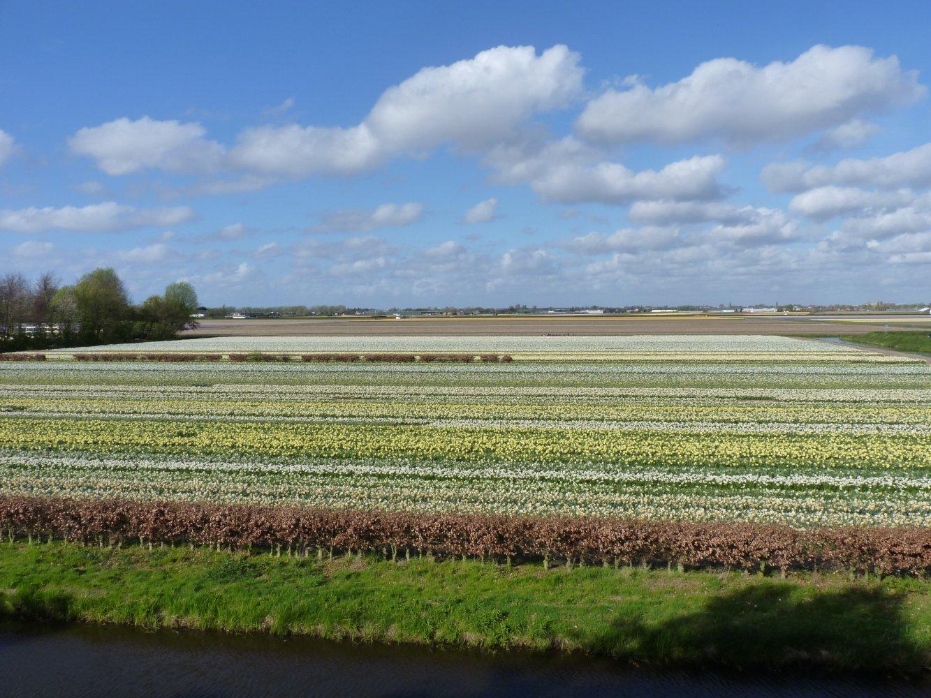 Фото P1210855.JPG. Нидерланды, Zuid-Holland, Lisse, Stationsweg, 164
