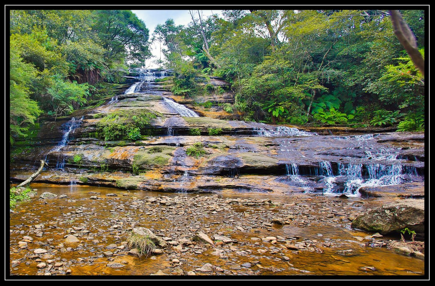 Фото 3228 - 1 (Copy).jpg. Австралия, New South Wales, Blue Mountains National Park, Hurley Heights Trail