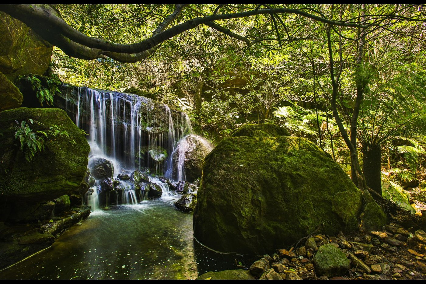 Фото 4794-1 (Copy).jpg. Австралия, New South Wales, Blue Mountains National Park, Hurley Heights Trail