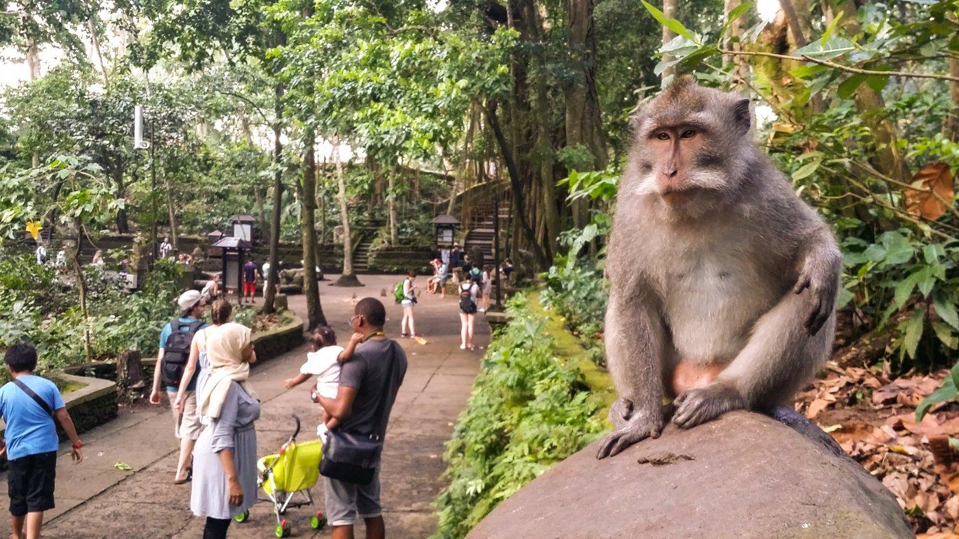 Фото 0623_326.jpg. Индонезия, Bali, Jalan Nyuh Bojog, 9-13