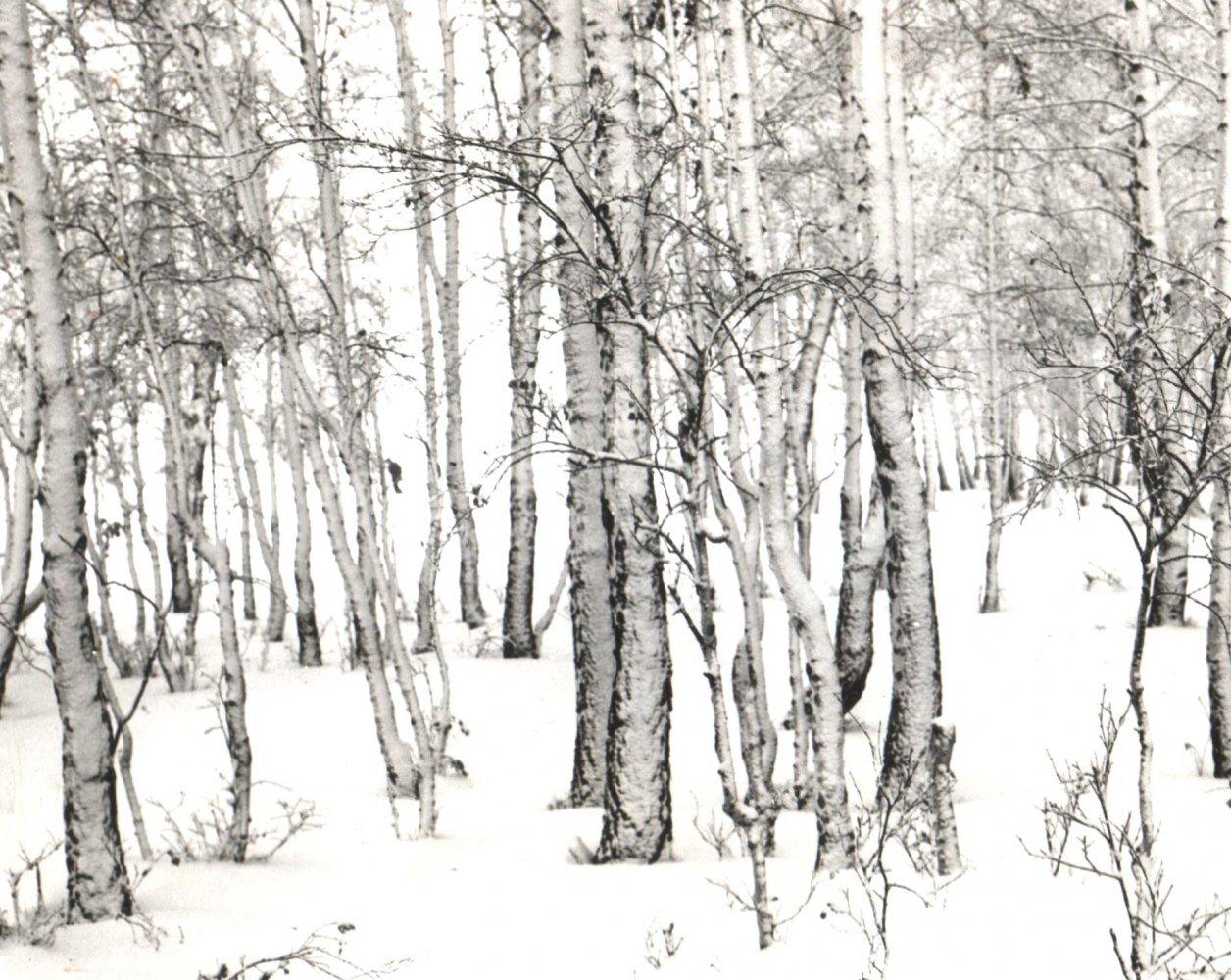 Фото Изображение 086.jpg. Казахстан, Северо-Казахстанская область, A-16