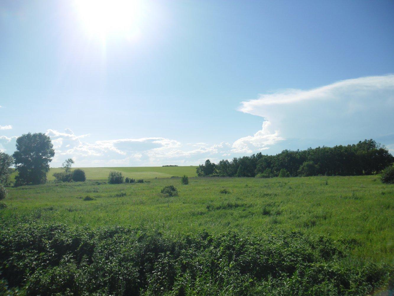 Фото Заросший огород.