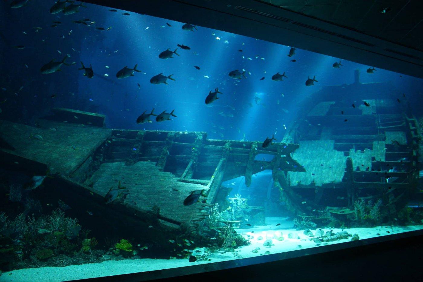 新加坡SEA 海洋馆攻略SEA 海洋馆门票地址SEA 海洋馆游览攻略  马蜂窝