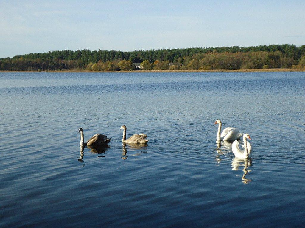 рыбалка на озере одгаст псковской области