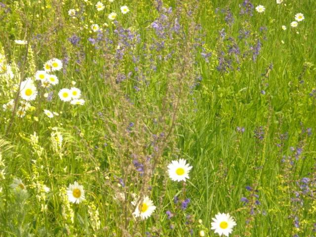 Фото лето, природа..... Россия, Брянская область, Сныткино, Unnamed Road