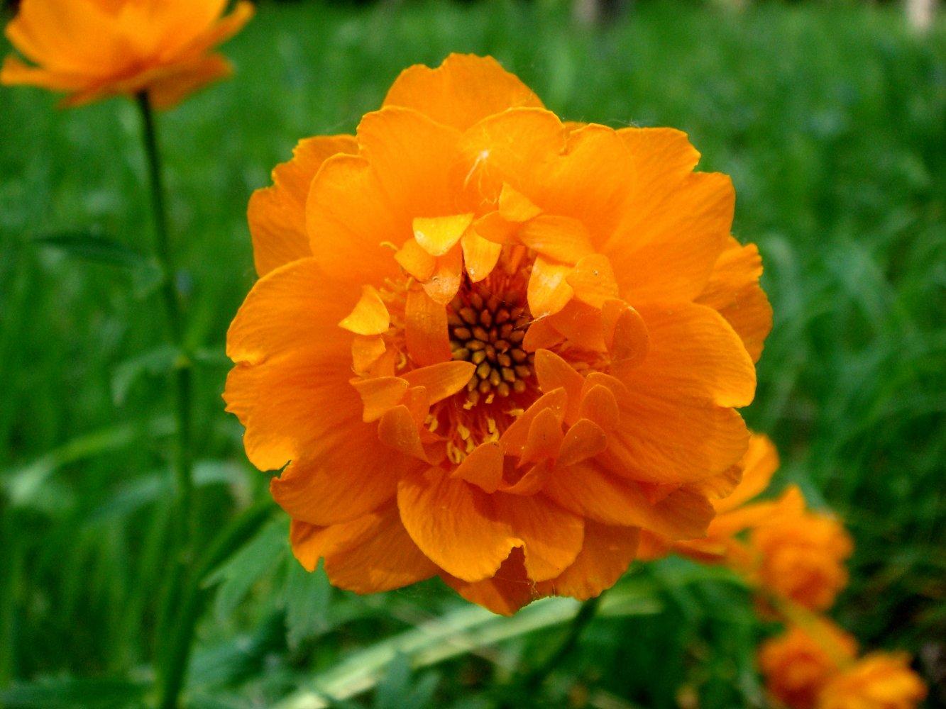 Фото цветов красноярского края