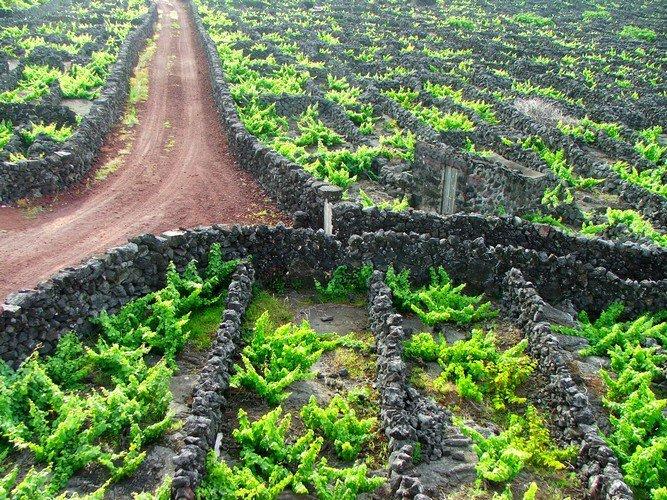 Фото Остров Пику. Португалия, Azores, 2-2
