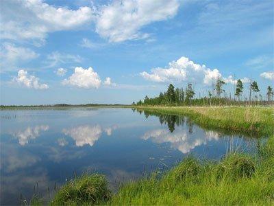 Фото Озеро Вялье. Россия, Ленинградская область, Кировская дорога