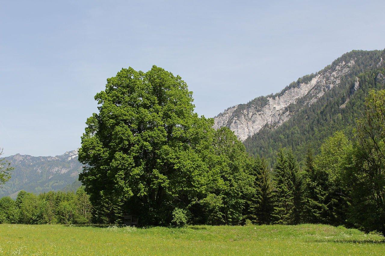 Фото Национальный парк Гезойзе. Австрия, Штирия, Йонсбах, Гезойзе / Хайндлькар - Хайндлькархютте - Йонсбах