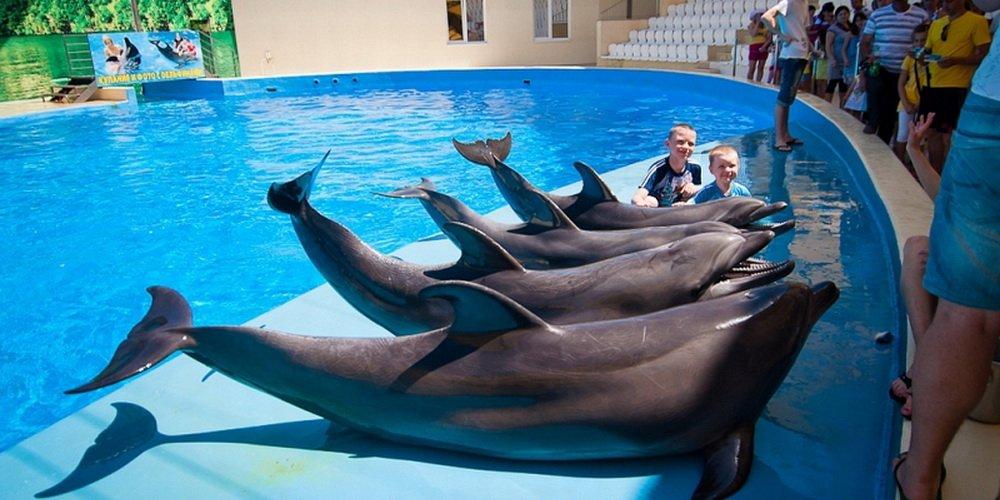 описание, фото, дельфинарии рядрм с анапой Антивирус Касперского