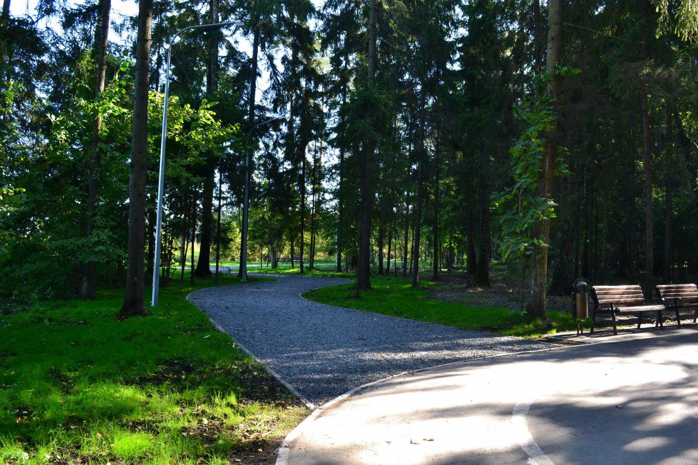 В Петровске будет создан лесопарковый зелёный пояс