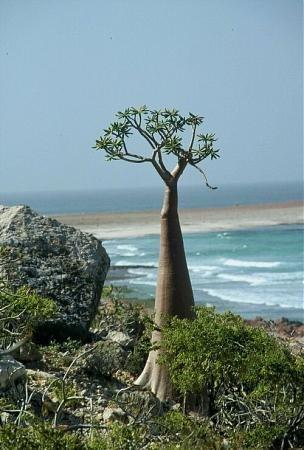 Где находятся остров сокотра