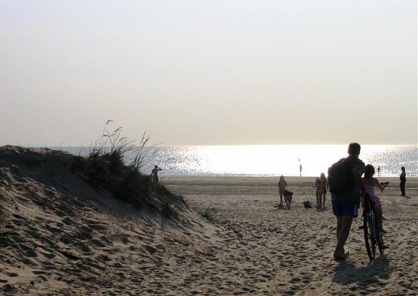 Пляж в сосновом бору 2