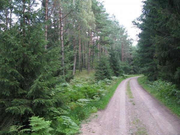 Фото  №1. Россия, Калининградская область, Unnamed Road