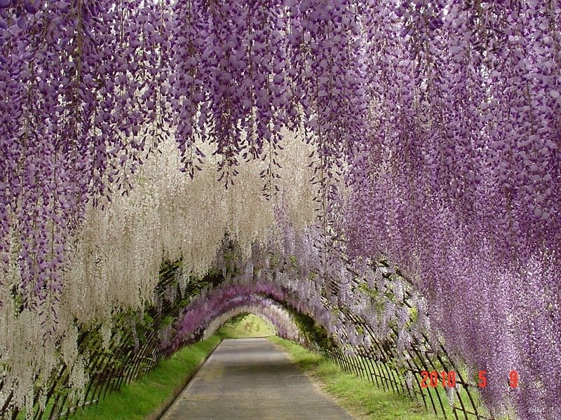 Фото сад цветов. Япония, Fukuoka-ken, Kitakyushu-shi
