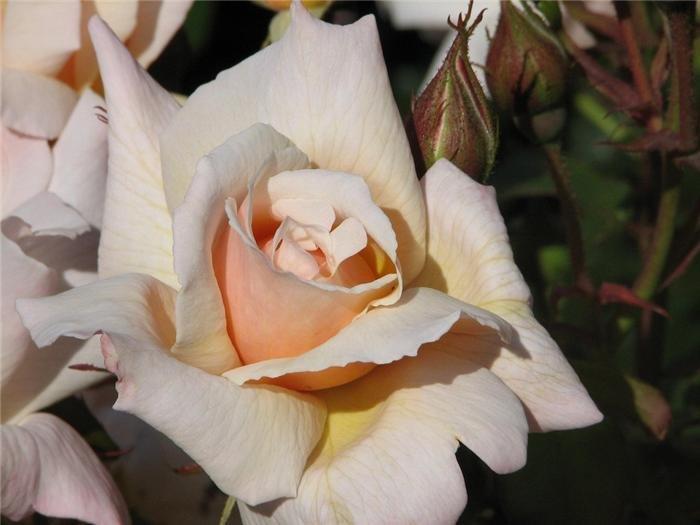 Фото lady norwood garden. Новая Зеландия, Веллингтон, Келберн, Гленмур-стрит, 101