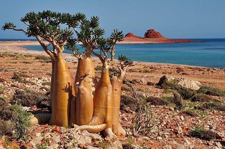 Фото остров Сокотра. Йемен, Hadramaut, Unnamed Road